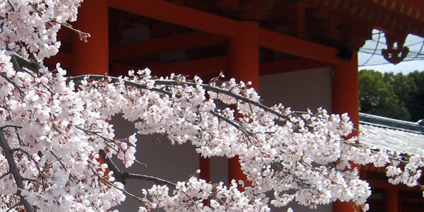 Japan Cherry Blossom (Jason Karsh 2010)